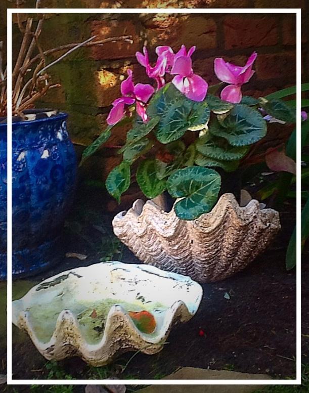 My Garden Clam Shells