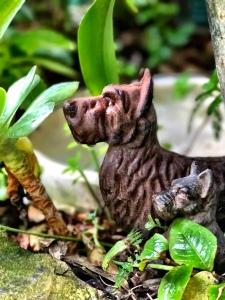garden-dogs-2
